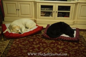 picture of a long over due sewing project - my 2 dogs Bella and Evie resting on their new beds